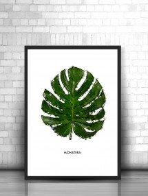 monstera akwarela